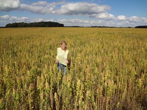 quinoa veld